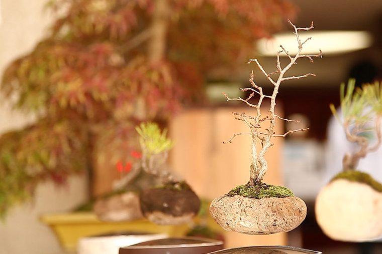 013_bonsaifes04