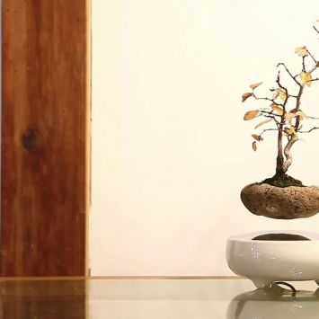 Air Bonsai by Bonsai Master, Masashi Hirao