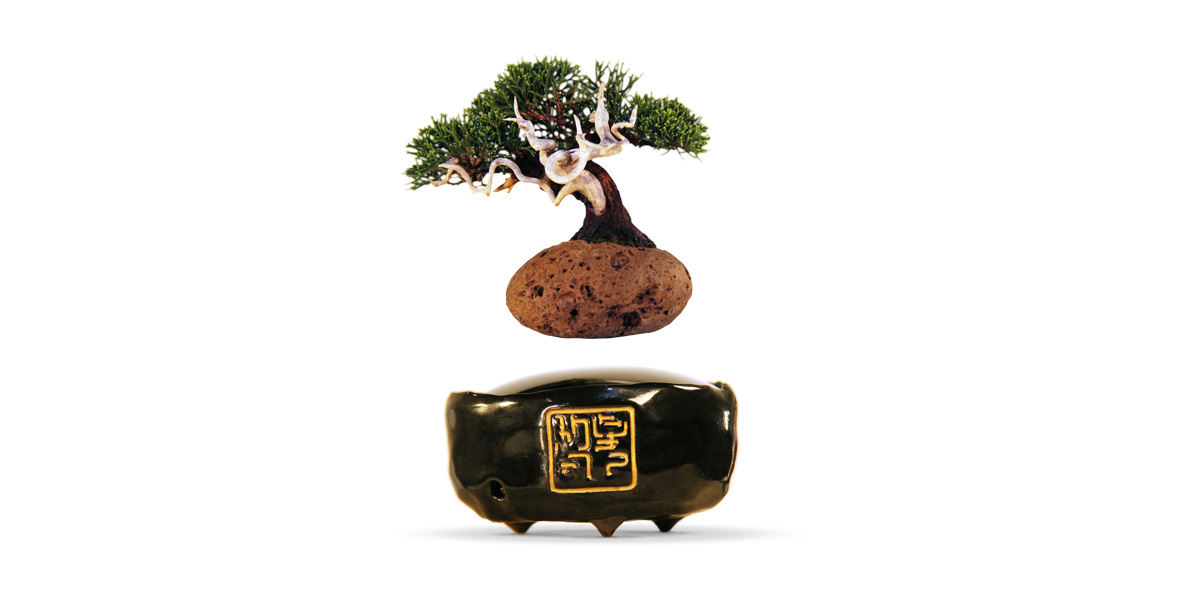 Hoshinchu Air Bonsai Garden Restore The Health And Beauty Of Our Star Planet Earth