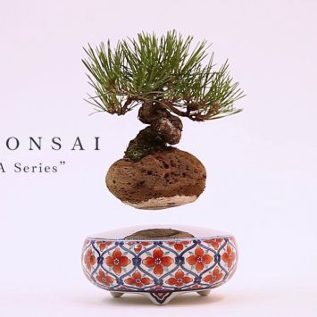[Official] HOSHINCHU | AIR BONSAI -ARITA Series-
